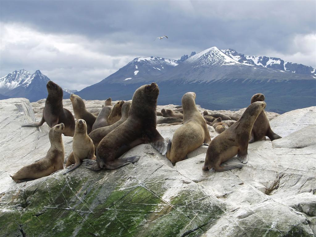 ushuaia-isla-lobos-marinos