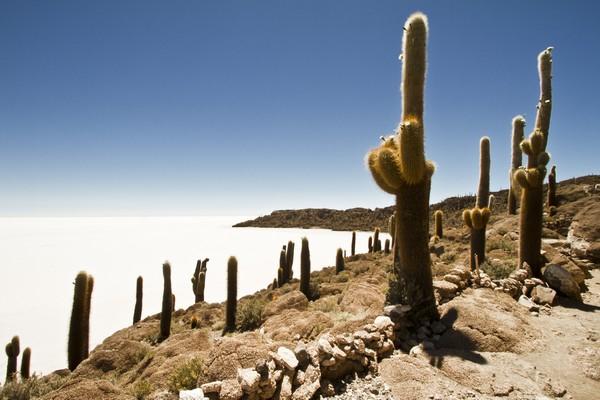 Cactus en cerro sobre inmenso salar
