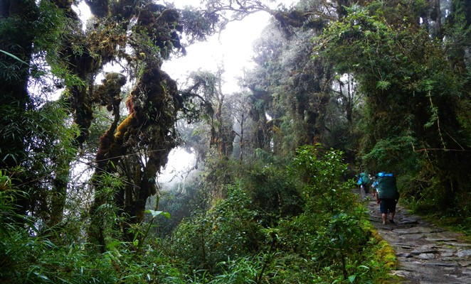 camino-Inca-trail-Machu-Picchu-thousandwonders_net (662 x 400)