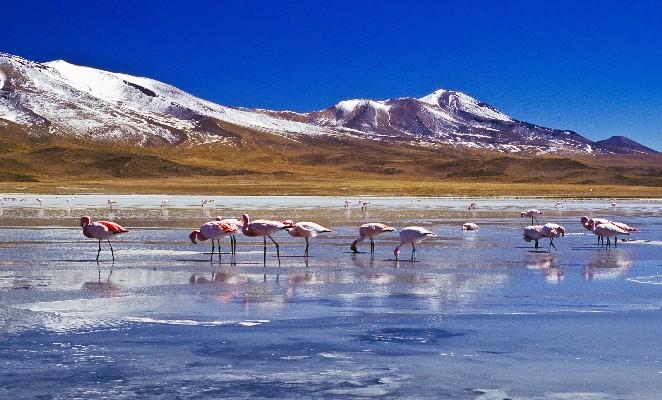 Flamingoes at Laguna Hedionda Bolivia
