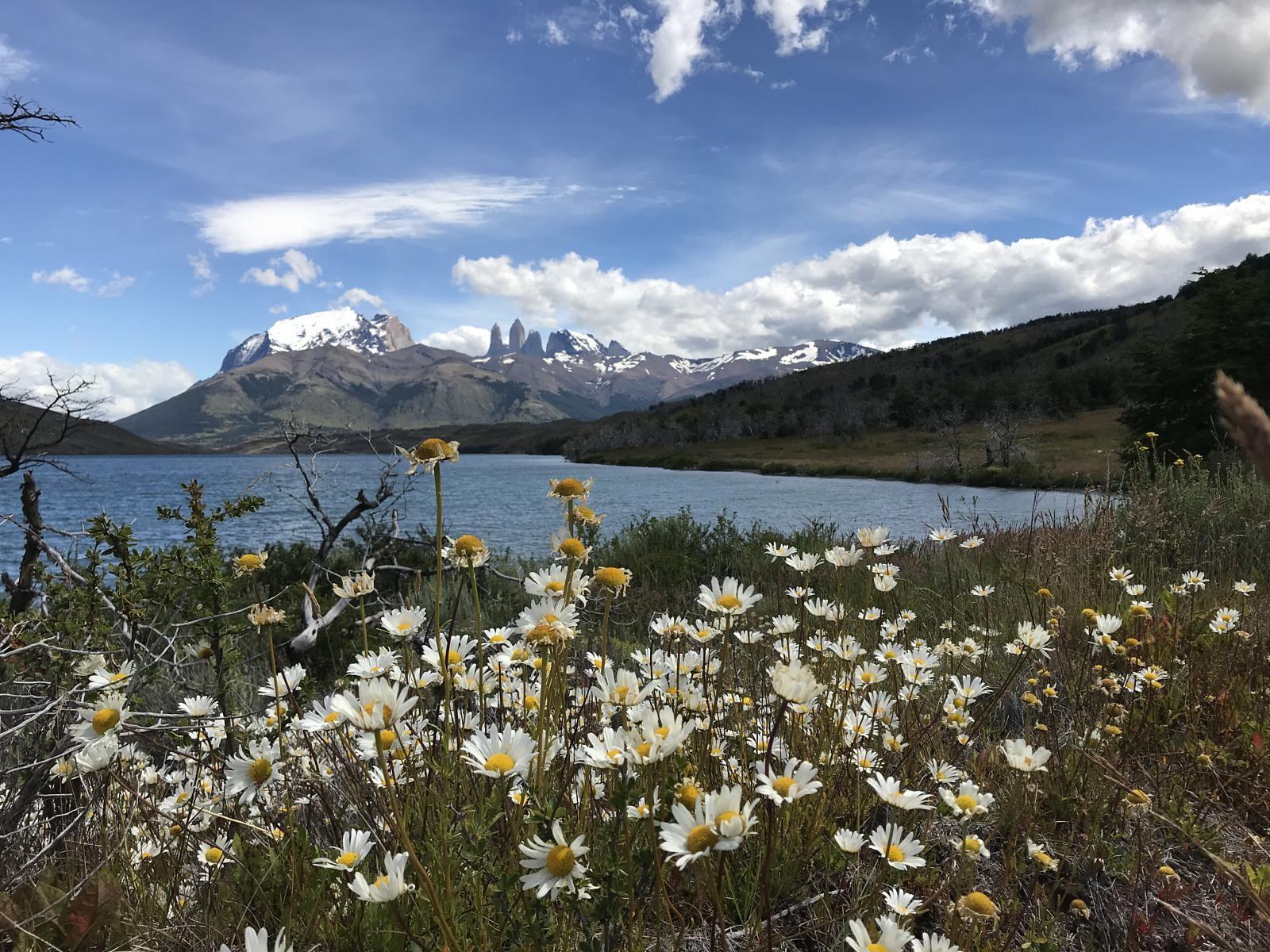 Flores, laguna y las torres del paine al fondo del paisaje