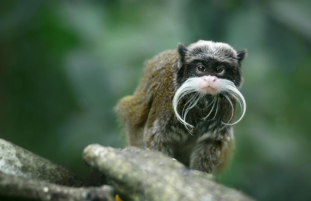 Mono parado sobre una roca en la selva
