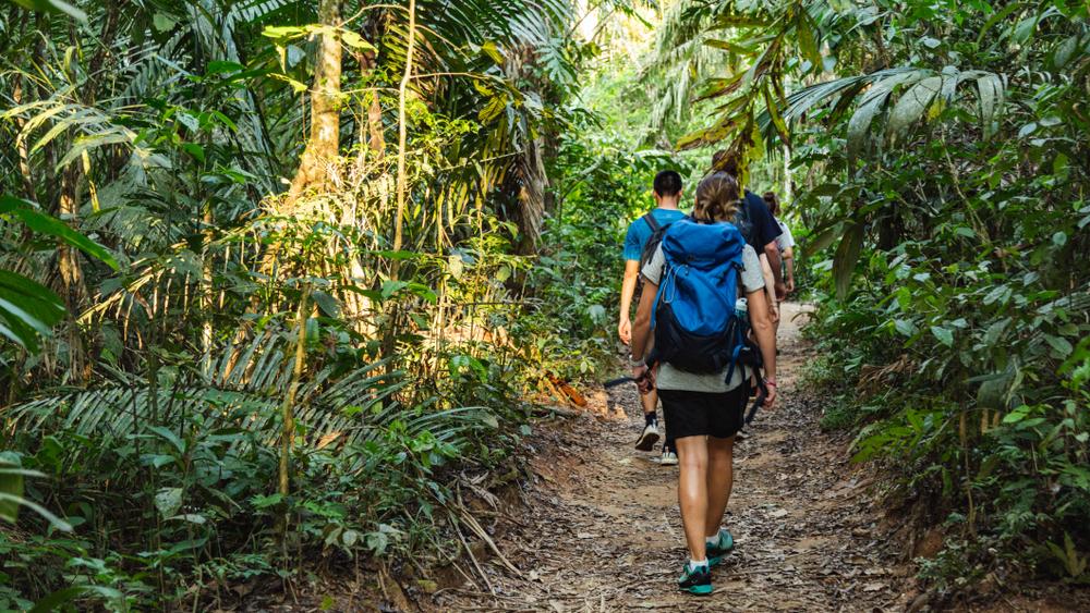 Viajero caminando por la selva