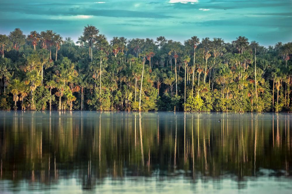 Reflejo de árboles sobre las aguas del lago sandoval