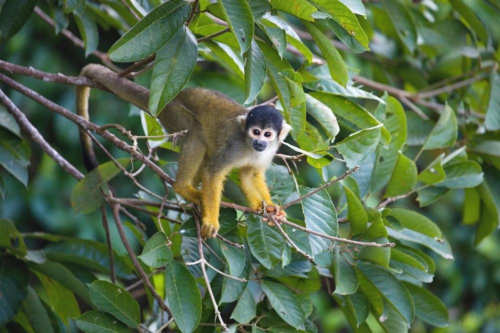 Mono ardilla en las ramas de un árbol
