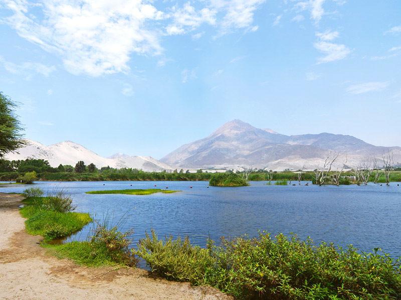 Laguna con vegetación en medio de paisaje desértico