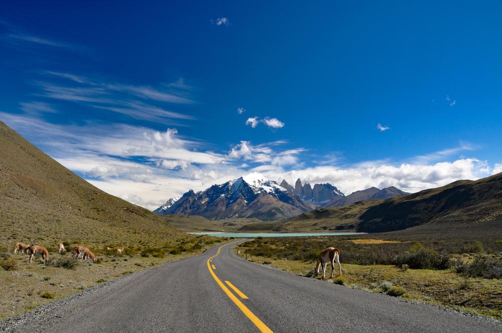 guanaco en el camino a cordón montañoso en torres del paine